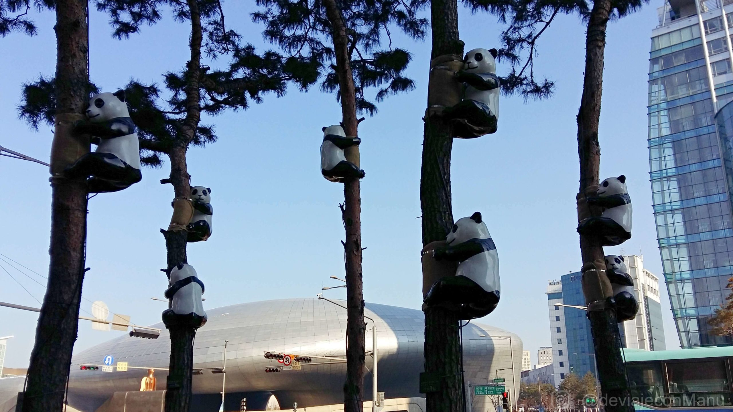 Pandas trepadores
