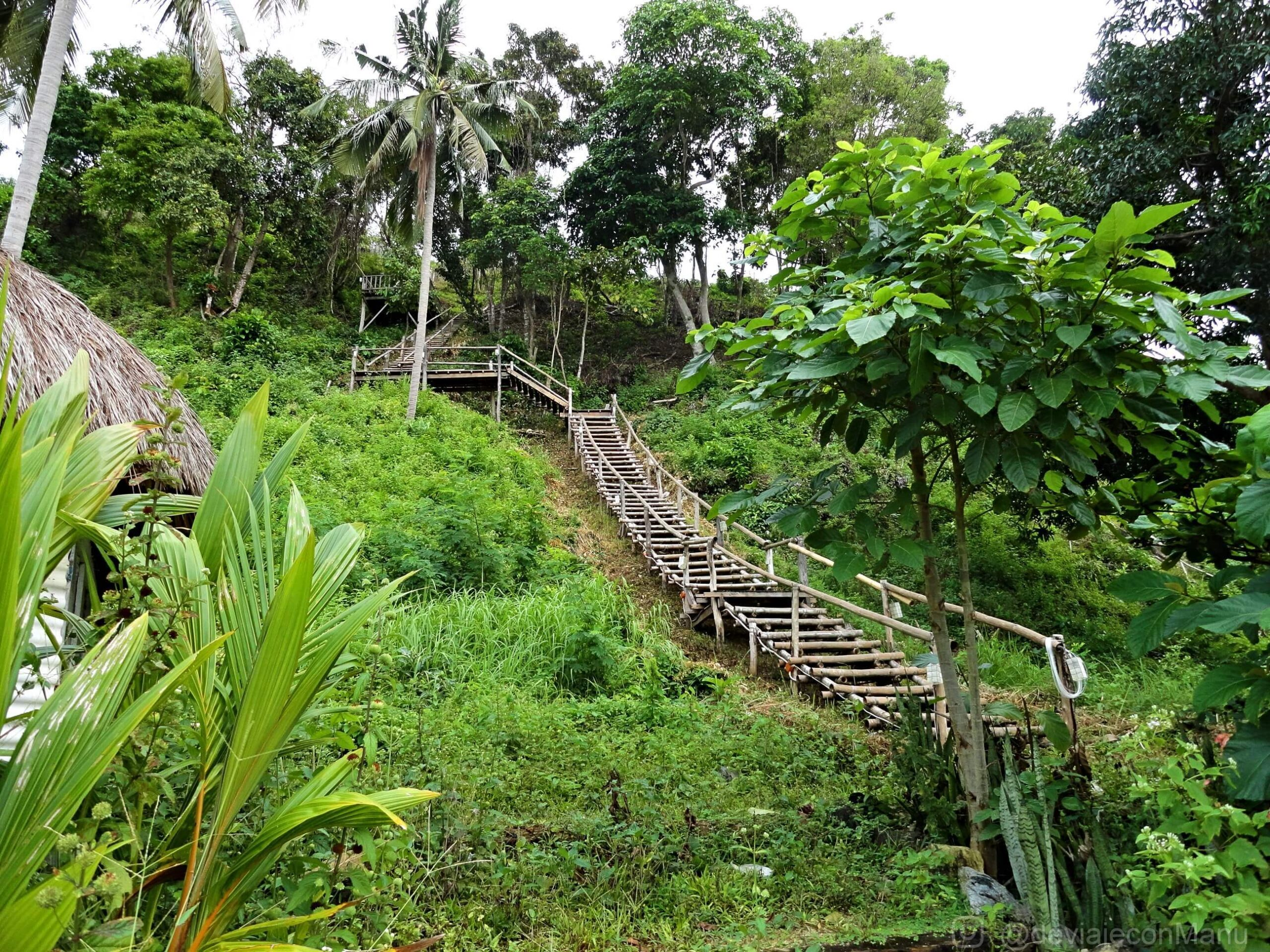 Escaleras selváticas