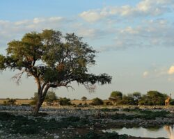 Conexión natural en Etosha