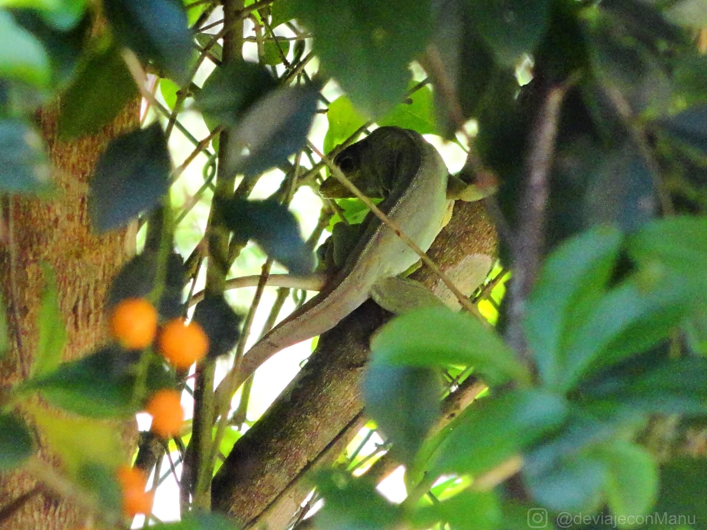 Reptil vigilante